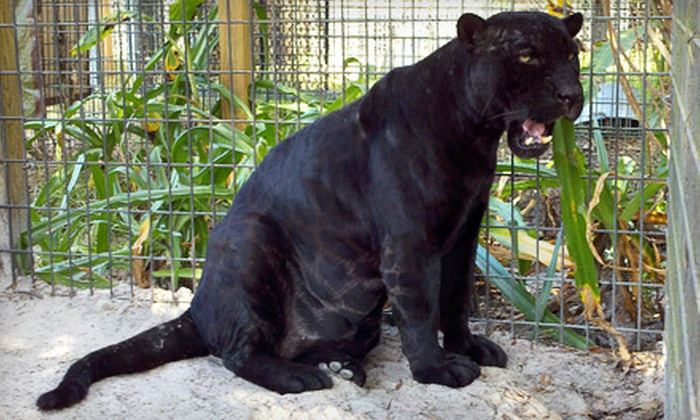 Florida International Teaching Zoo - Bushnell: Zoo Outing for Two or Four to Florida International Teaching Zoo in Bushnell (Up to 58% Off)