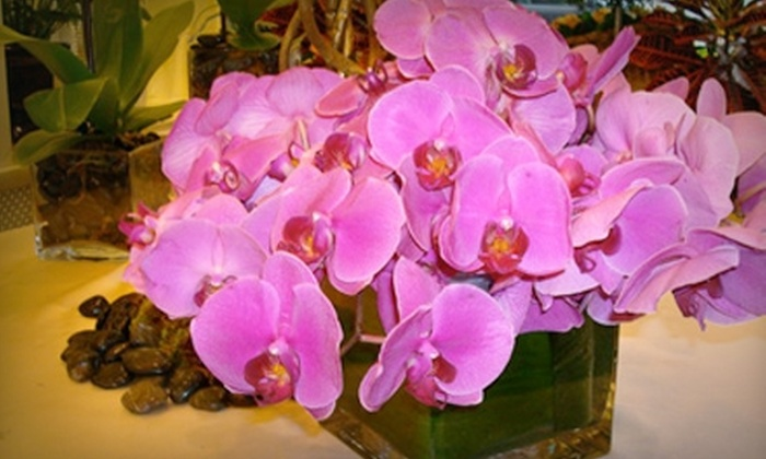 Barbara's Flowers - Multiple Locations: $25 for $50 Worth of Flowers and More at Barbara's Flowers. Two Locations Available.
