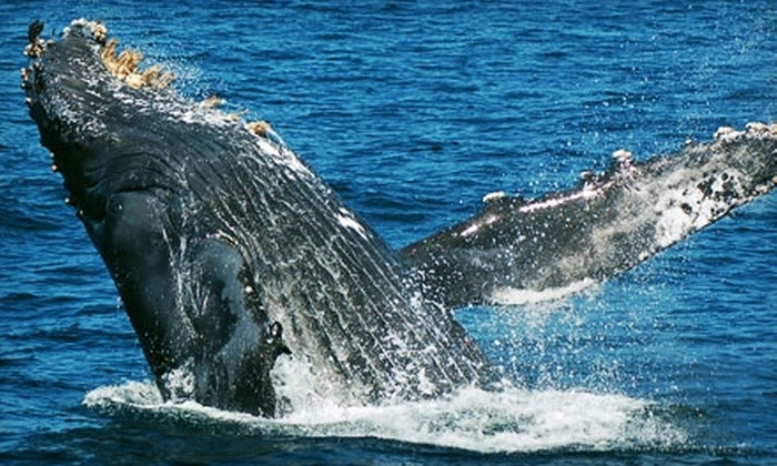 Blue Ocean Whale Watch - Castroville: $23 for a Four-Hour Whale-Watching Tour from Blue Ocean Whale Watch ($46 Value)
