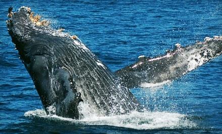 Blue Ocean Whale Watch - Blue Ocean Whale Watch in Moss Landing
