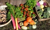 Canvas Ranch - Petaluma: $56 for a Four-Week Trial Subscription for Fresh Produce from Canvas Ranch ($112 Value)