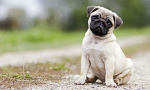 K-9 Cuts Dog Grooming Salon: Bath Treatment for Small, Medium, or Large Dog at K-9 Cuts Dog Grooming Salon(Up to 48% Off)