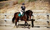 Up to 56% Off Riding Lessons