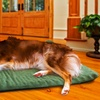 Orthopedic Pet Mattress 2-Pack in Suede or Terry