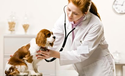image for $25 for $50 Worth of Veterinary Services — Care Plus Veterinary Clinic