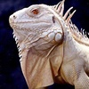 Up to 53% Off Reptile-Zoo Trip in Gurnee