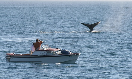 Two-Hour Evening Whale-Watching Cruise for One, Two, or Four from Dana Wharf Whale Watching (Up to 54% Off)