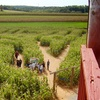 Up to 57% Off Corn Maze Package