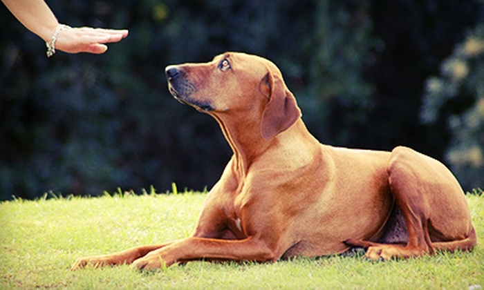 Dogs Making Better Choices - Oklahoma City: One Private Dog-Training Lesson or a Six-Week Training Course at Dogs Making Better Choices (55% Off)
