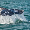 Up to 59% Off Whale-Watching Cruise
