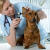 49% Off a Full Physical Examination for One Dog or Cat