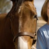 52% Off Equine U. at French Broad River Dude Ranch