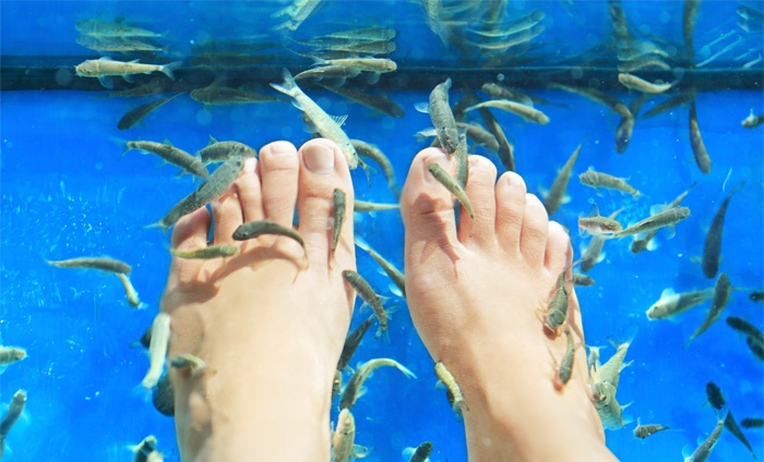 Fish spa bij garra rufa garra rufa fish spa centre groupon for Fish spa near me