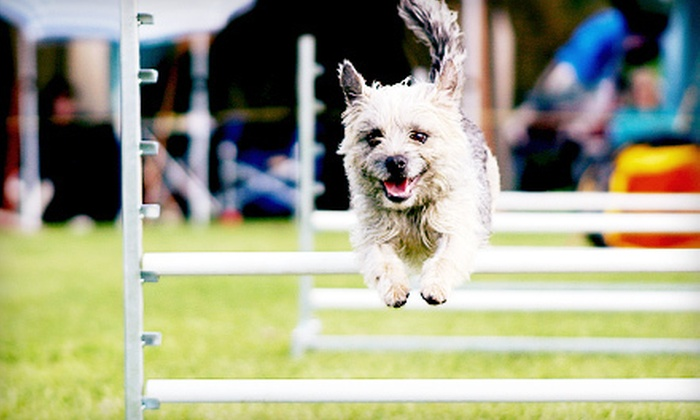 Boston's Dog Show Summer Classic - Wrentham: Admission for Two to Boston's Dog Show Summer Classic in Wrentham on June 2–3 (Up to Half Off). Two Options Available.