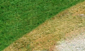 Brown Lawn Green: $25 for $50 Lawn Painting Groupon — Brown Lawn Green