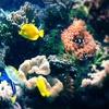 Up to Half Off Visit to Ocean Explorium
