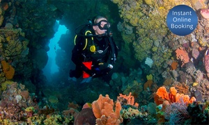 Dive Victoria: Two-Day Scuba Dive Course with 10 Boat Dives for One ($189) or Two People ($299) at Dive Victoria (Up to $4,420 Value)