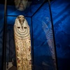 """Mummies of the World"" Exhibit – Up to 42% Off"