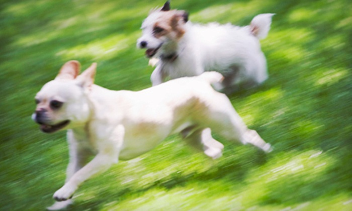 The Hound Lounge - Sutherland Industrial: One, Three, or Five Days of Doggie Daycare at The Hound Lounge (Up to 51% Off)