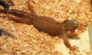 The Reptile Zoo: Visit for Two or Four to The Reptile Zoo (Up to 31% Off)