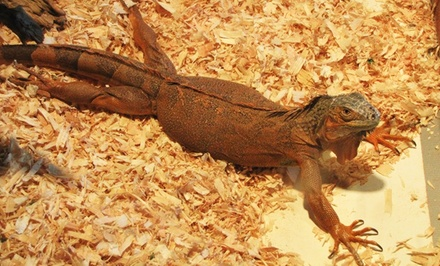 Visit for Two or Four to The Reptile Zoo (Up to 31% Off)