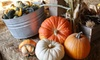 Airlie Hills Harvest Festival and Pumpkin Patch - Monmouth-Independence: Visit with Unlimited Activities for Two or Four at Airlie Hills Harvest Festival & Pumpkin Patch (Up to 52% Off)