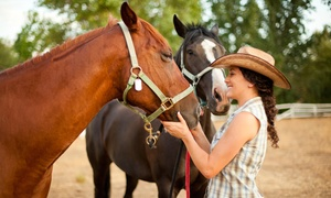 Rocking LT Ranch: One or Two 60-Minute Horseback-Riding Lessons at Rocking LT Ranch (Up to 42% Off)