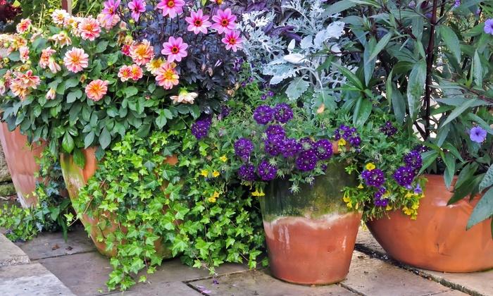 Jlh Blooms - San Diego: $165 for $300 Worth of Plants — JLH Blooms