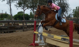 Norco Equestrian Academy: Up to 52% Off One, Three, or Five Horseback Riding Lessons  at Norco Equestrian Academy