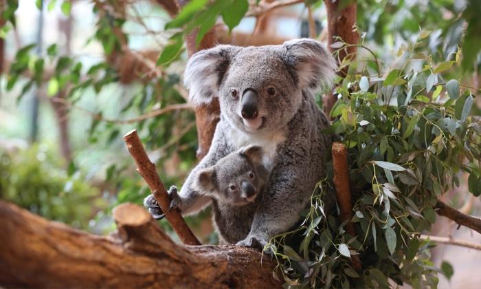 Zoo de beauval en famille zoo parc de beauval groupon for Appart hotel zoo de beauval