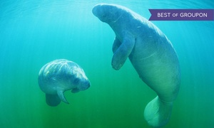 Manatee Tour and Dive: $30 for a Manatee Tour & Snorkel-Equipment Rental for One Adult from Manatee Tour and Snorkel ($49 Value)