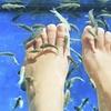 Fishpedicure, en solo ou duo