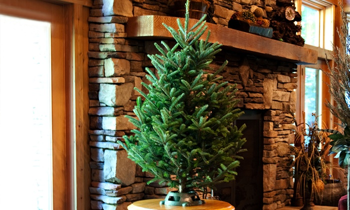 Fresh Cut 3–4-Foot Christmas Tree With Stand