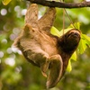 8-Day Costa Rica Adventure Vacation from Costa Rica Monkey Tours
