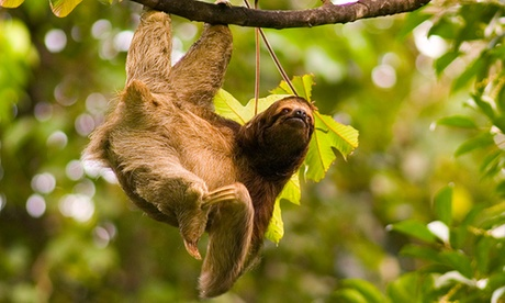8-Day Jewels of Costa Rica Tour for Two from Costa Rica Monkey Tours. Starting at $674.50/Person. Airfare Not Included. 2d119a3f-a267-4eb5-97c1-7bc4d91fe1b3