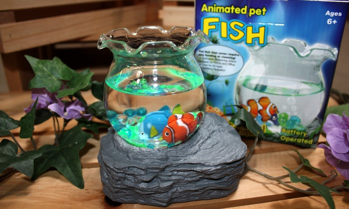 Animated pet fish or turtle groupon goods for Fish bowl pets