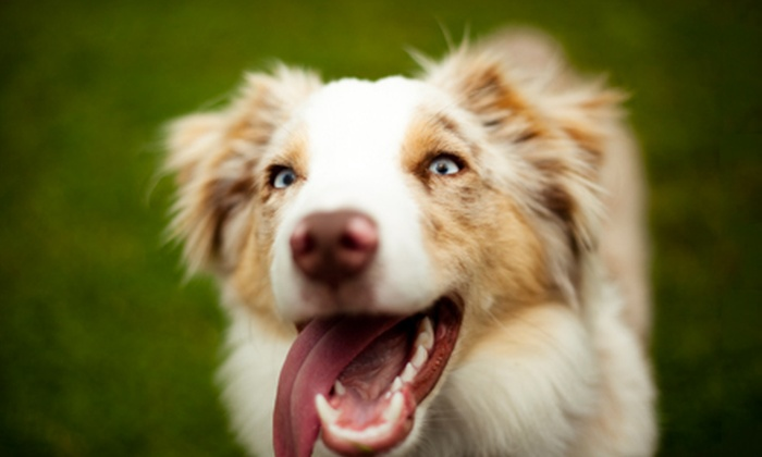 Unleashed K9 - Spring Hill: Three or Five Nights of Dog Boarding with Daily Runs at Unleashed K9 (Up to 61% Off)