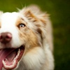 Up to 61% Off Dog Boarding at Unleashed K9