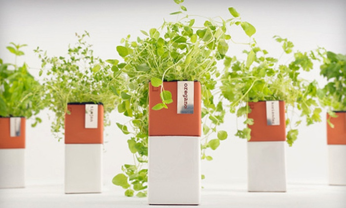 Bambeco: Eco-Friendly Home Decor, Accessories, and Gifts from Bambeco (Half Off). Two Options Available.