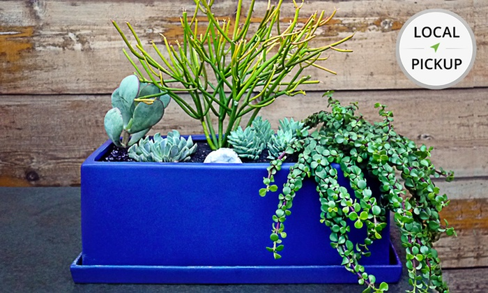 Sprout Home - West Town: Blue Windowsill Planter. Pick Up in Store at Sprout Home.