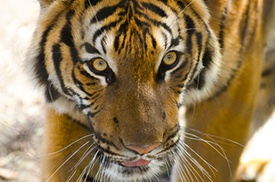 Woodland Park Zoo: Visit to Woodland Park Zoo for an Adult or Child (Up to 25% Off)