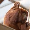 Eintritt Kölner Zoo und Aquarium