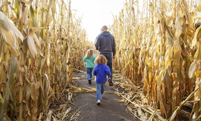 Pumpkin Junction - Raritan: $15 for $24 Worth of Corn-Mazes — Pumpkin Junction Corn Maze & Family Fun