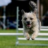 Up to 55% Off at the Greater New York Pet Expo