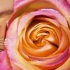 58% Off Eyelash Extensions at Spa Degas