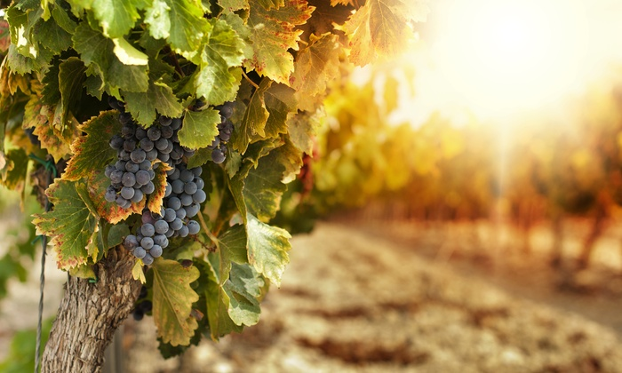 Dom Whitney Wines - Windsor: Wine Tasting for Two or Four at Dom Whitney Wines (50% Off)