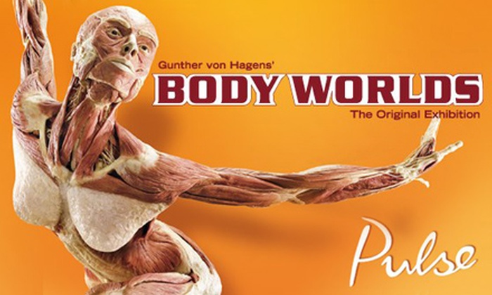 """Body Worlds"" - Discovery Times Square: ""Body Worlds: Pulse"" Human-Anatomy Exhibit for Child, Senior, or Adult at Discovery Times Square (Up to 51% Off)"