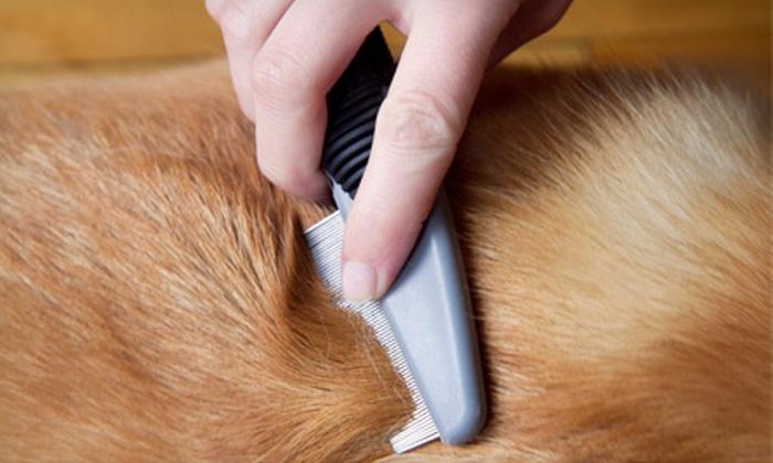 Precita Bark - Bernal Heights: Full-Service Wash for a Small or Large Dog at Precita Bark (Up to 51% Off)