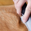 Up to 51% Off Dog Washes at Precita Bark