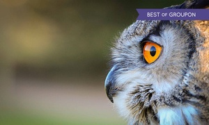 Feathers and Fur: Three-Hour Hands-On Birds of Prey Session for One or Two at Feathers and Fur (Up to 71% Off)